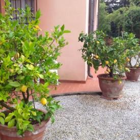 Villa Rosa - Gardens